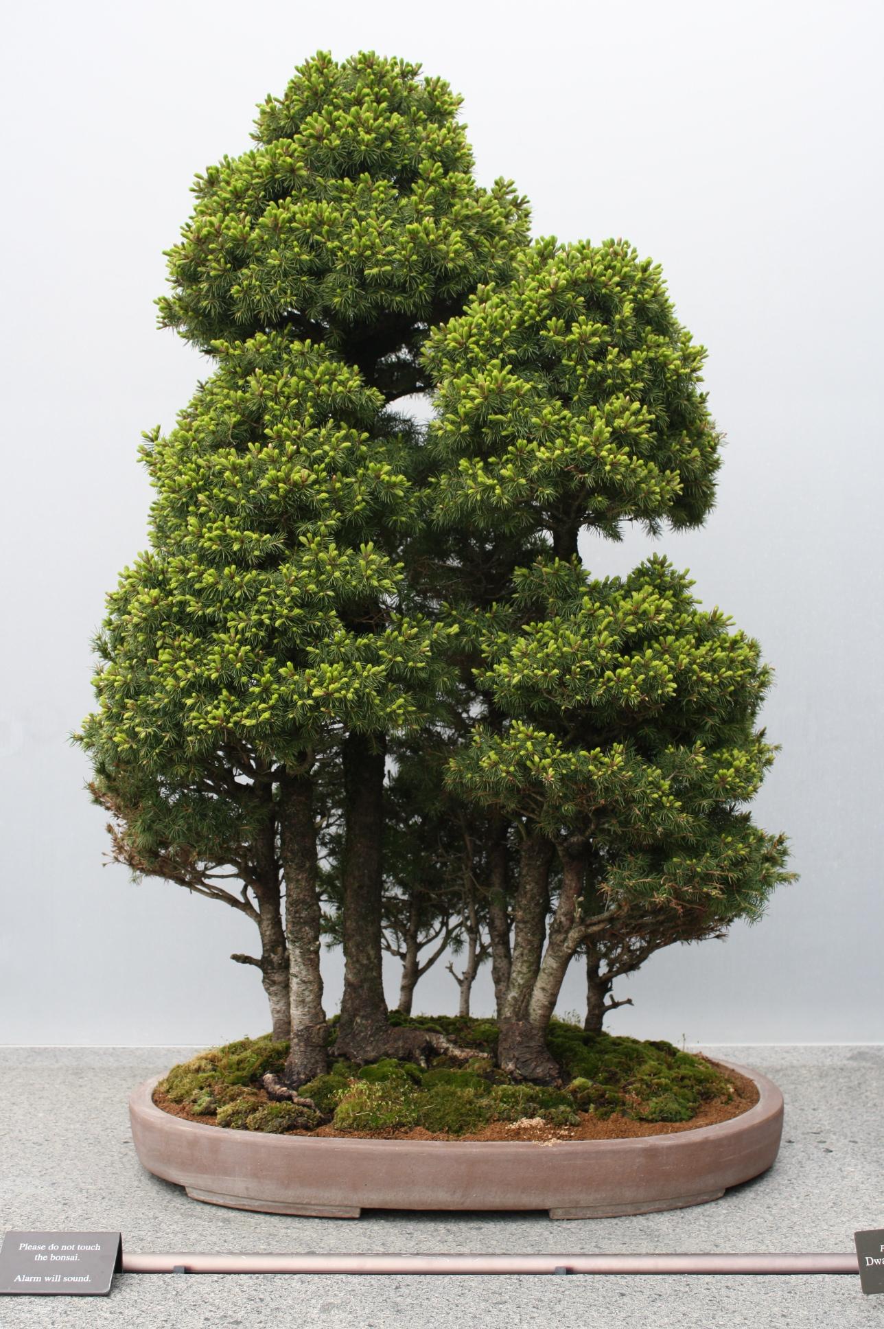 bonsai forest bird flower